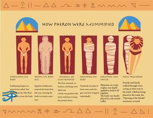 Bissan Elnader, Mummification Process
