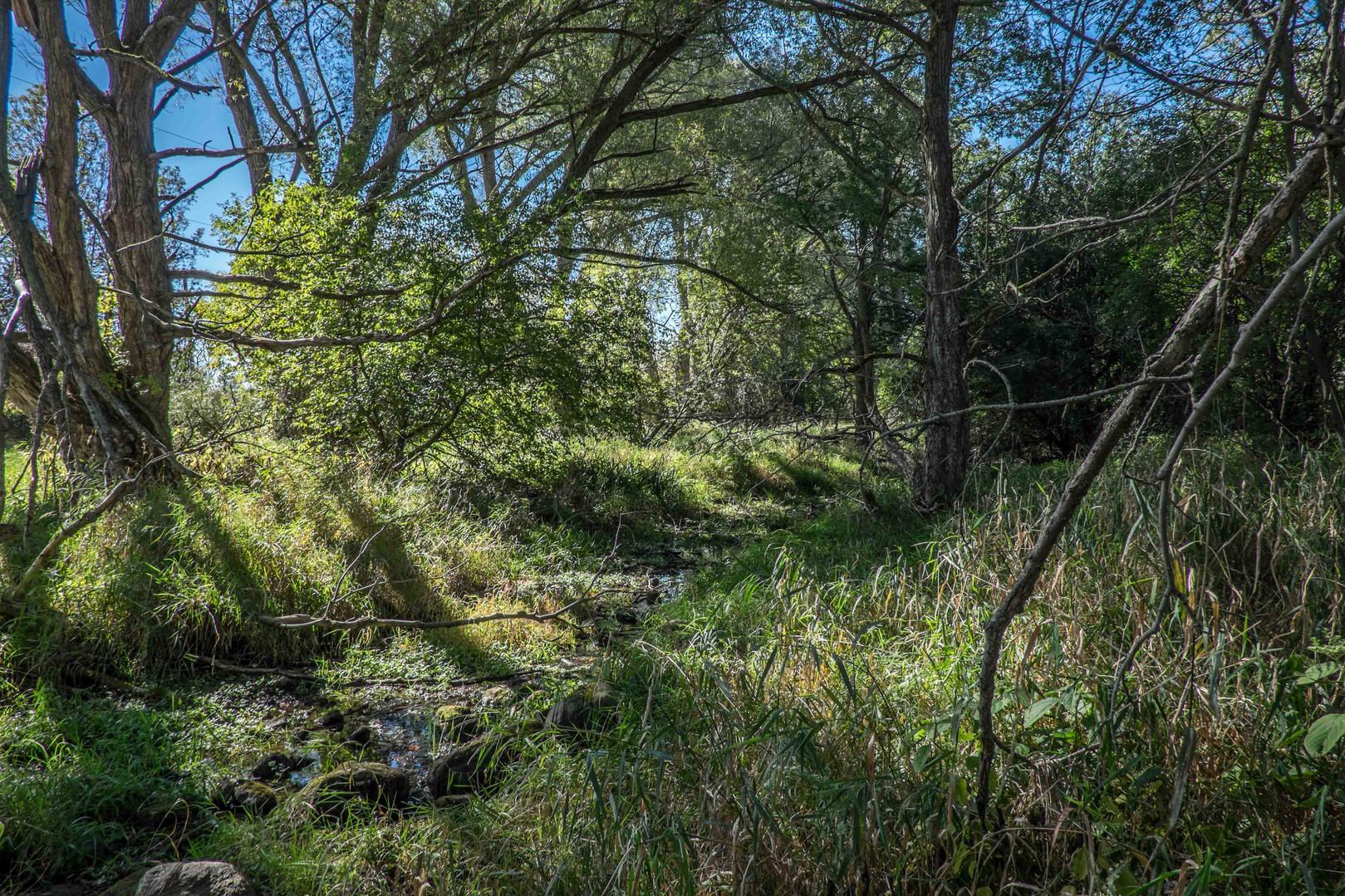 wild Creek -9610.jpg