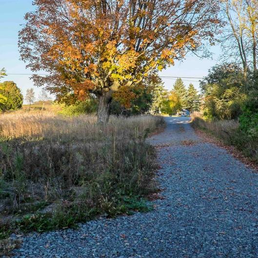 Driveway-3561_edited_edited.jpg