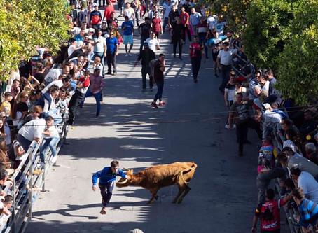 Suelta de Vacas en San José del Valle