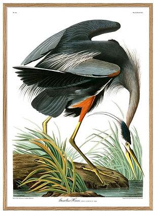 "Affiche ""Blue Heron"" The Dybdahl Co"