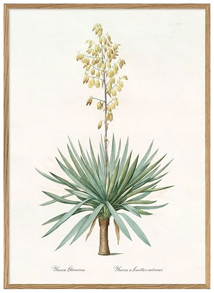 """Affiche """" Yucca"""" The Dybdahl Co"""