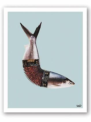 Affiche accordéofish Ganzaï