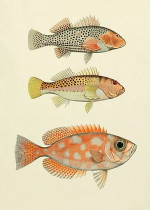 """Affiche """"The fishes"""" The Dybdahl Co"""