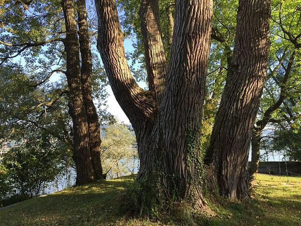schonender nachhaltiger Umgang Pflege Baum Baumpflege Schweiz Zürich