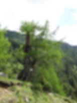 Statische Grundsicherheit Baum Sicherheitsfaktoren Windwiderstand Lastabtragung
