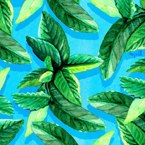 MINT LEAVES Illustrating Giselles ingredients