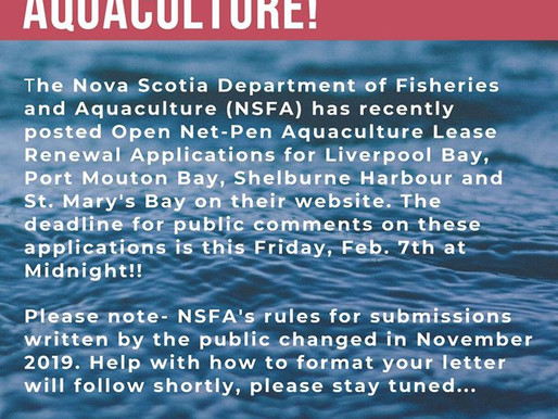 Public comments open for net-pen lease renewals in Liverpool, Port Mouton, Digby, Shelburne