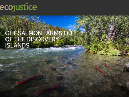 Deadline Looms to Get Salmon Farms Out of The Discovery Islands