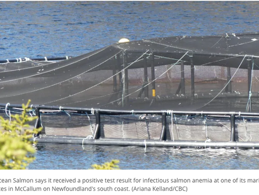 ISA disease detected in Atlantic salmon at Cooke marine cage site in Newfoundland