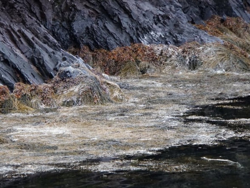No dead salmon numbers confirmed; photos not 'very pretty' but not the whole picture: Gerry Byrne