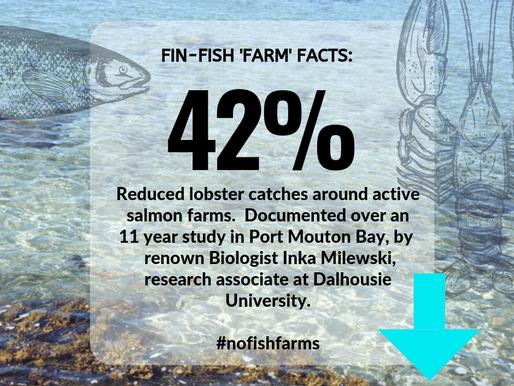 PLB World Ocean Week 2019 Campaign:  Fin-Fish 'Farm' Fact #2.