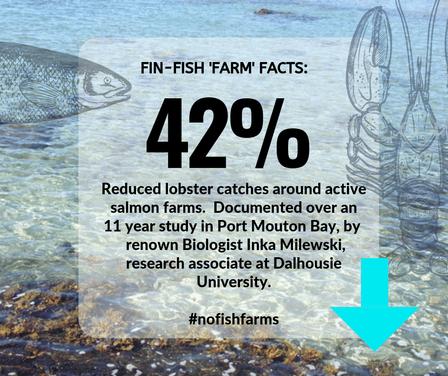 Fin-Fish Fact #2-web.png