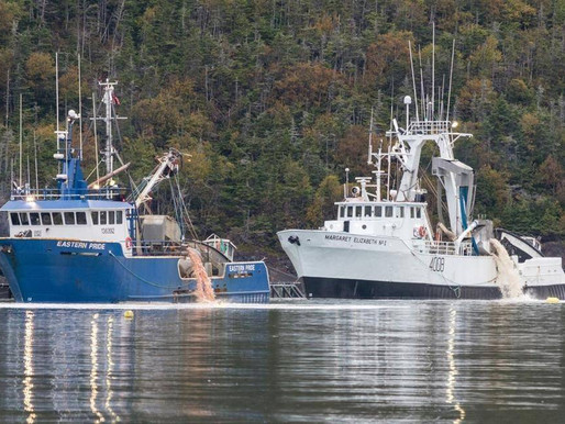N.L. government urged to reassess aquaculture expansion after salmon die-off  |  Global News