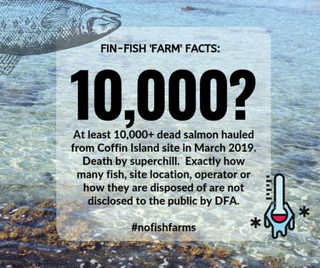 Fin-Fish Fact #3-web.png