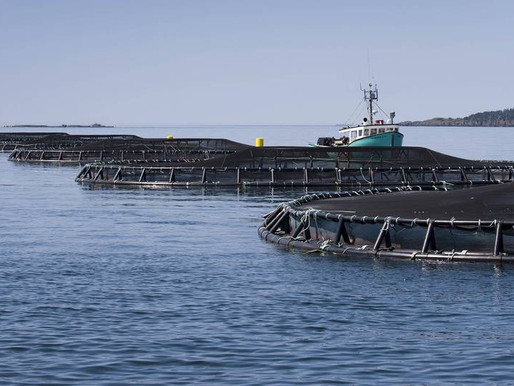 Letter calls on two N.S. Liberal cabinet ministers to enforce salmon farm leases |  Chronicle Herald