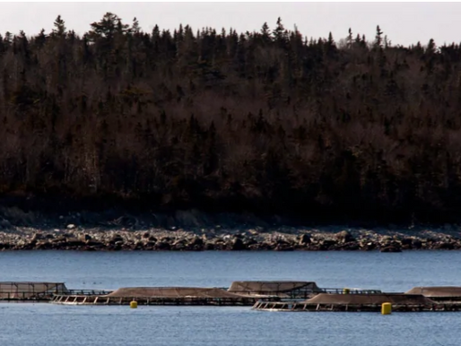 Aquaculture opponent says N.S. disregarding freedom-of-information rules - CBC