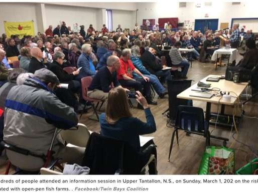Public rally held in Upper Tantallon in opposition to open-pen salmon fish farms - Global News