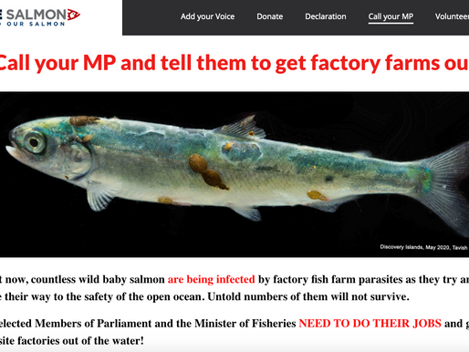 Factory fish farms are killing wild salmon. Advocates call on MP's and Minister to DO THEIR JOB!