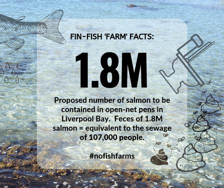 Fin-Fish Fact #1-web.png