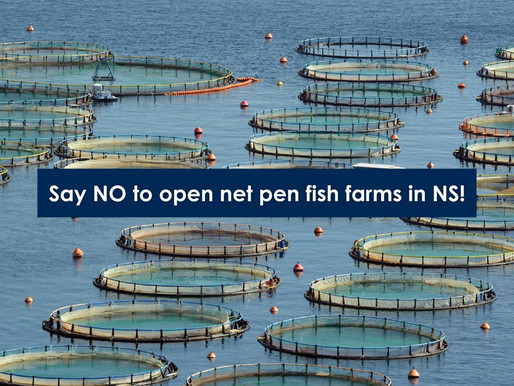 Public Input: Demand letter highlights illegal operation taking place at Cooke NS salmon farm sites