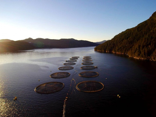 Shutting down salmon farms in BC begins in 2022