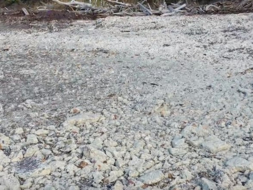 Dead salmon residue remains as Northern Harvest Sea Farms says cleanup complete   CBC News