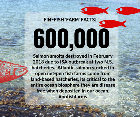 Fin-Fish Fact #7-web.png