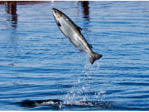 As deadlines loom Cermaq hasn't finalized fish farm locations - CBC