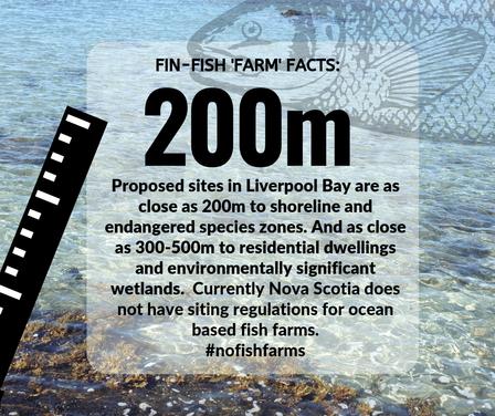 Fin-Fish Fact #4-web.png