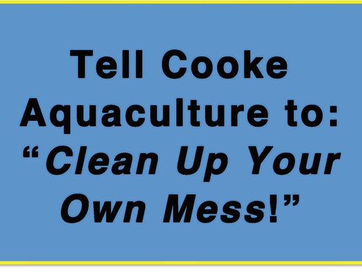 "Protest Rally - Tell Cooke Aquaculture ""Clean up your own mess!"""