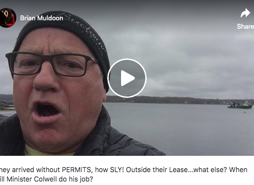Video: Cooke Re-stocks Coffin Island fish farm site outside their lease area