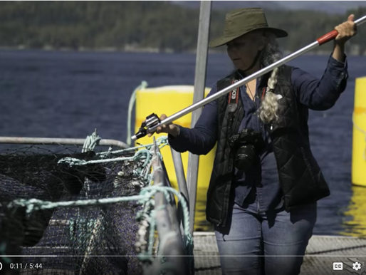 Video:  What Happens when Alexandra Morton gets 10 minutes on a salmon farm...