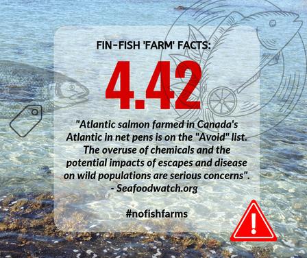 Fin-Fish Fact #5-web.png