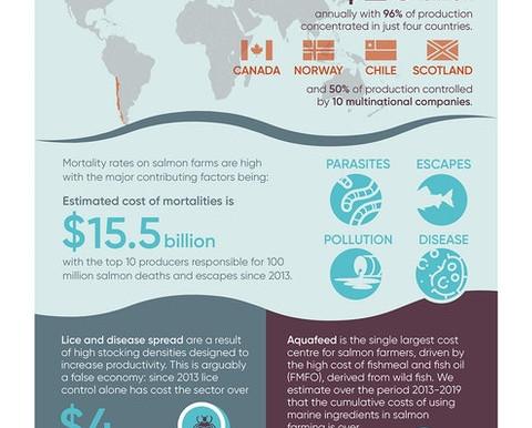 The Dead Loss Report:  Billions in losses in salmon aquaculture  |  South Coast Today