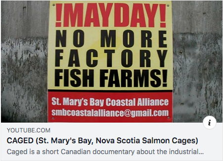Caged: A video documentary, St.Mary's Bay, Nova Scotia salmon cages, 2011.