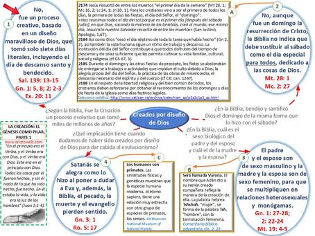 Lección 8: LA CREACIÓN: EL GÉNESIS COMO PILAR, PARTE 1 (23 de mayo 2020)