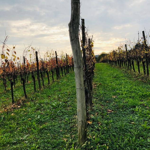 La-Cricca-vigne-Craoretto