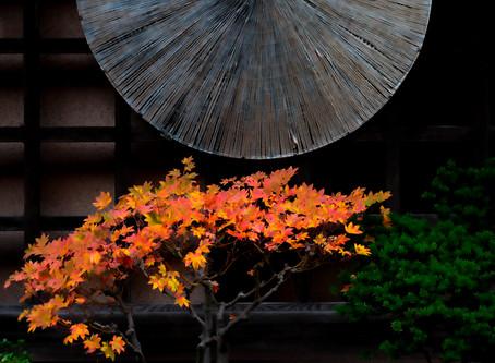 越後妻有の秋は一足ごとに