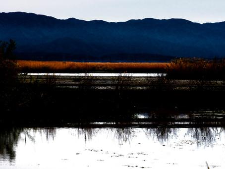 秋の福島潟は色めいて