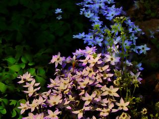 流れ紫陽花