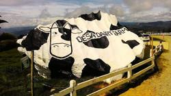 Desa Farm