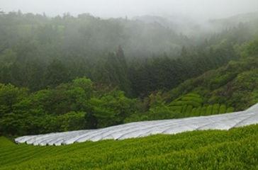 00景観mist.jpg