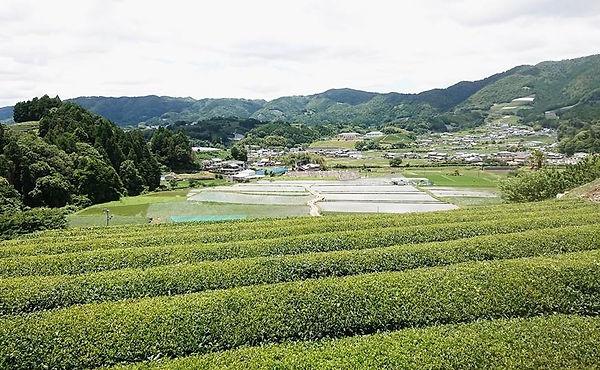 0613 wazuka from hill.jpg