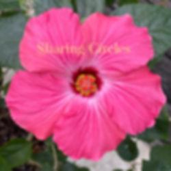 Hibiscus Sharing Circle photo.jpg