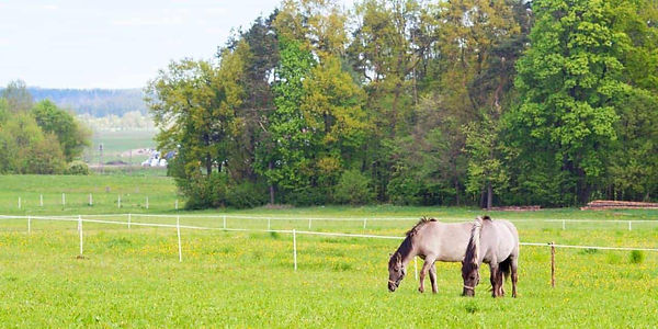 horses-in-pasture-divided-by-electric-fe