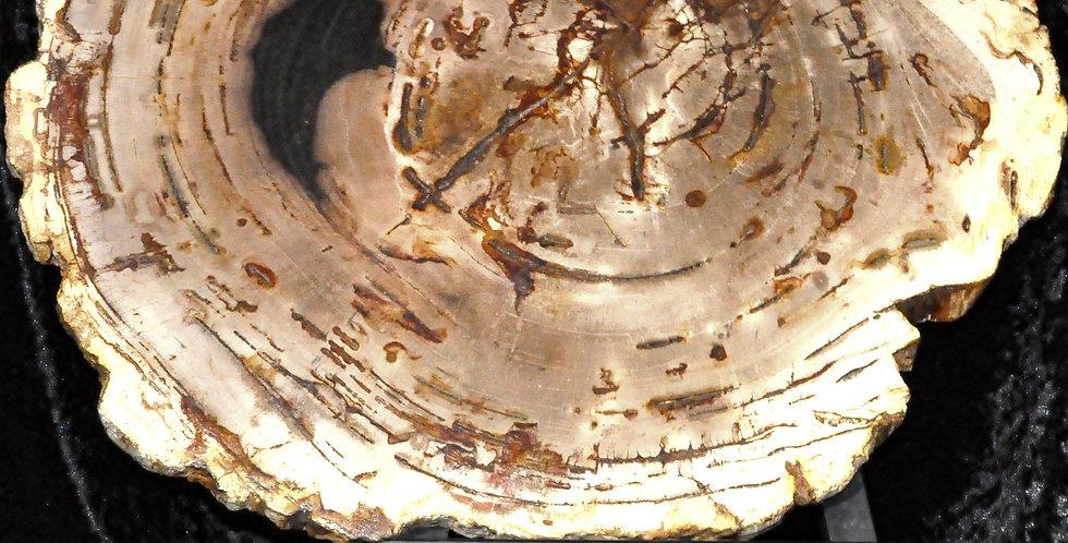 Petrified Wood Plates