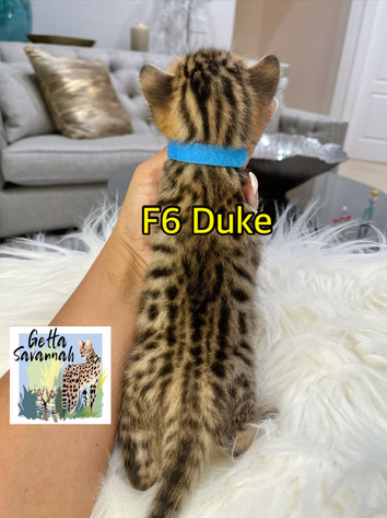 Getta Savannah