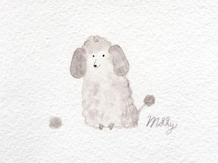 Molly the Silver Poodle