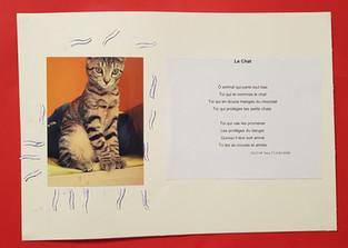 Le chat Nezzar.jpg